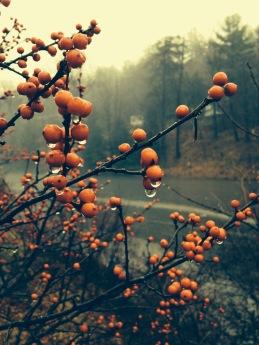 berries peterborough