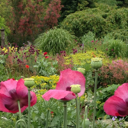 Elliot's Garden